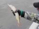 Cupă de pescuit la știucă în Delta Dunării. FOTO Adrian Boioglu